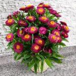Buchete de flori pentru ziua de nastere